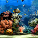 3D Aquarium Screensaver İndir